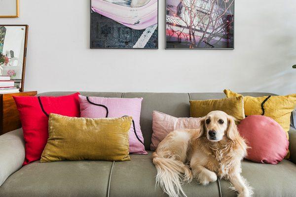 5 Dicas para decorar o cantinho do seu pet